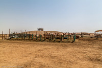 Visiting a farm @Riyadh KSA