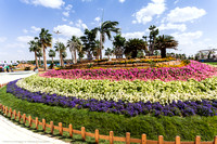 9th Flower fest @Yanbu